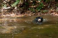 Meet Micah the rescued sun bear 2